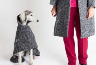 Milan : la capitale de la mode pour chien