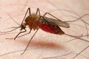 Recrudescence des cas de dengue: la destruction des gîtes larvaires débute ce 24 août 2018