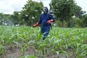 Campagne agricole:Batterie d'actions pour écraser la chenille légionnaire