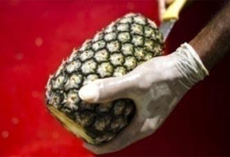 De la cocaïne retrouvée dans des ananas