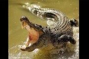 Ouganda: une mère et son bébé dévorés par un crocodile