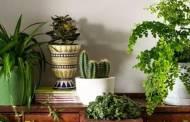 Avoir des plantes à la maison permet de vivre plus longtemps d'après les chercheurs