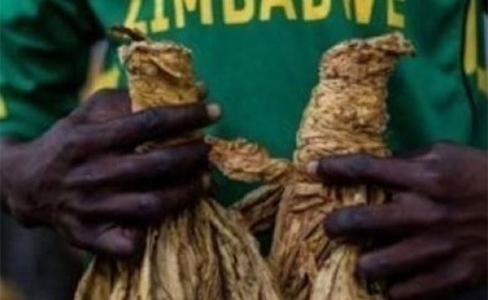 Le tabac tire la croissance économique au Zimbabwe