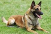 France: Un homme pend son chien puis l'enterre