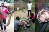 Des villageois tuent un python géant et préparent une soupe pour tout le village