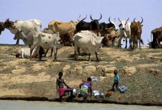 Près de 40 morts dans l'attaque d'un village peul dans le centre du Mali