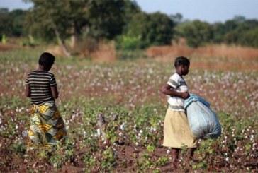 Le Burkina Faso tombe à la 4e place des producteurs de coton en Afrique