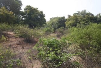 Forêt classée de Kua : «La délibération du conseil municipal de Bobo Dioulasso est «irrégulière» et ne peut être appliquée (ministre de l'environnement)