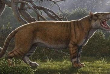 Le fossile d'un lion géant retrouvé au Kenya