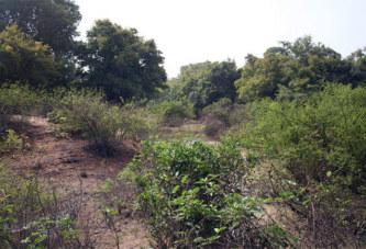 Affaire forêt de Kua : Un burkinabè s'adresse aux puissants du jour