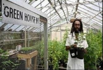 Un scientifique s'installe en Jamaïque pour cultiver le ganja fumé par Bob Marley