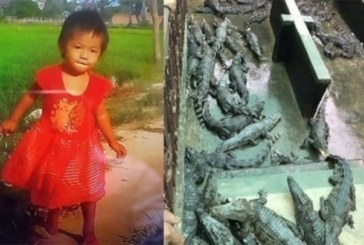 Une fillette de 2 ans tombe dans l'enclos des crocodiles et meurt dévorée