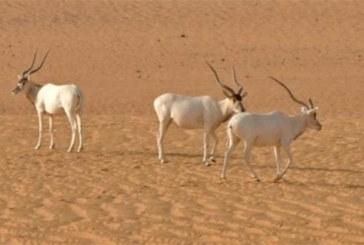 Niger : La plus grande réserve naturelle d'Afrique de l'Ouest sera partiellement déclassée pour la production pétrolière