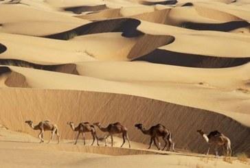 L'Union Européenne déconcerte les Mauritaniens en leur offrant des chameaux