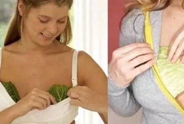 Comment utiliser le chou contre les seins engorgés ?