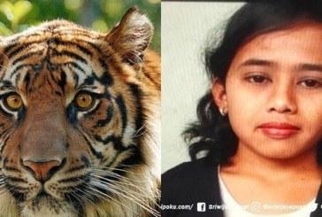 Il chasse un tigre mais l'envoie vers sa nièce et l'animal la dévore vivante