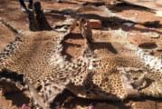Protection des espèces fauniques au Burkina Faso: Deux trafiquants condamnés à 12 mois de prison