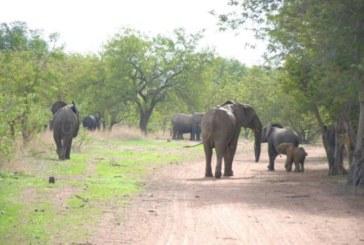 Terrorisme: «À l'Est du Burkina Faso,les terroristes occupent les parcs d'Arly et du W» ( Entretien)