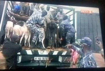 Côte d'Ivoire : 30 individus en provenance du Burkina Faso, cachés dans un camion de bétails, interpellés à Bouaké