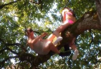 Ils tentent de faire l'amour dans un arbre: l'homme tombe avec le pénis en sang