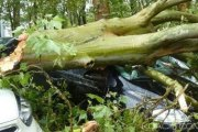 Côte d'Ivoire : Drame, Deux syndicalistes tués par un gros arbre à Gagnoa