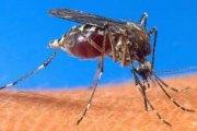 Paludisme: Un premier vaccin contre le paludisme dès 2015 ?