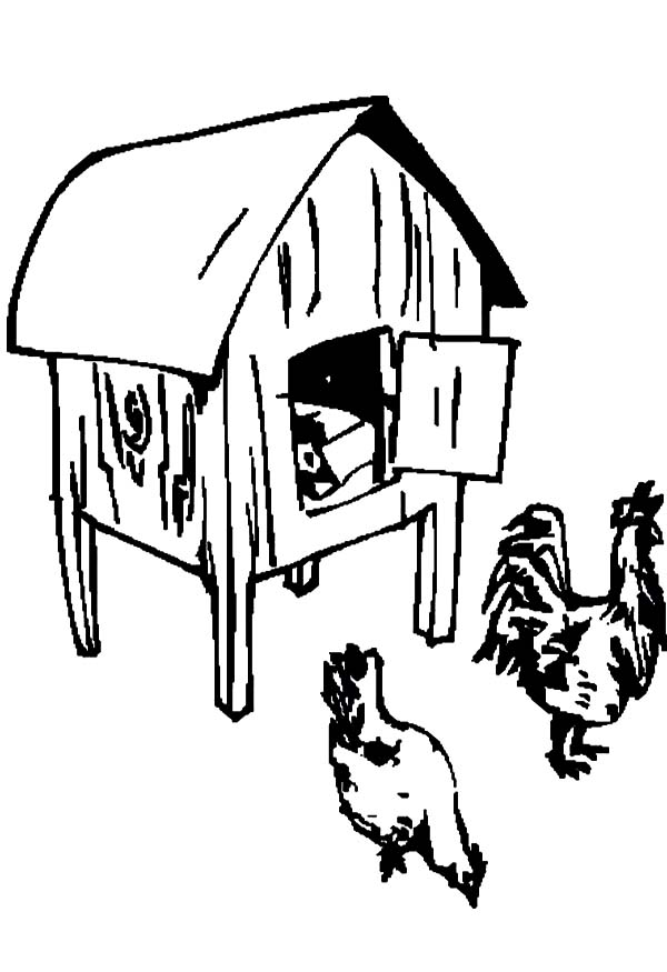 Finding Food In Front Of Chicken Coop Coloring Pages NetArt