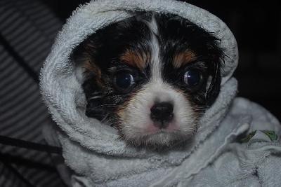 Efter ett sk�nt bad f�r man en sk�n handduk att v�rma sig i det kan inte bli b�ttre