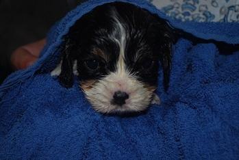 Holly har badat f�r f�rsta g�ngen !