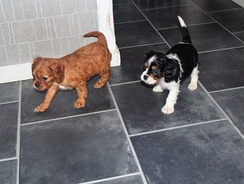 Här är Turbo och Trixi