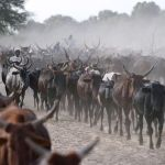 Chad 'repaying $100m debt to Angola with cattle'