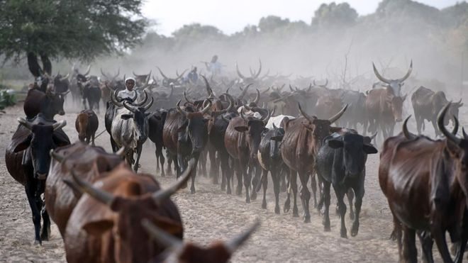 Chad'repaying $100m debt to Angola with cattle'