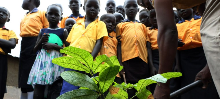 South Sudan receives 5000 seedlings of trees to countering climate change