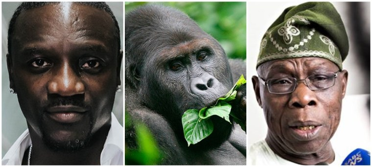Kwita Izina 2018: Akon, Obasanjo attend gorilla naming ceremony in Rwanda