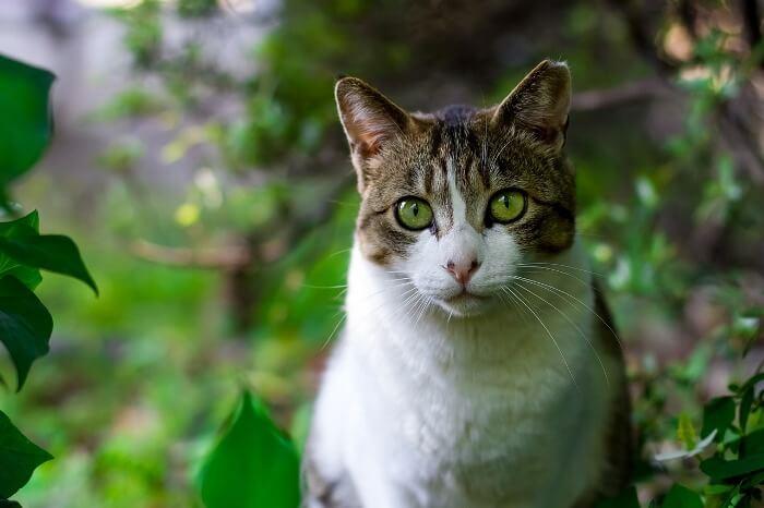 cat-725793_1280