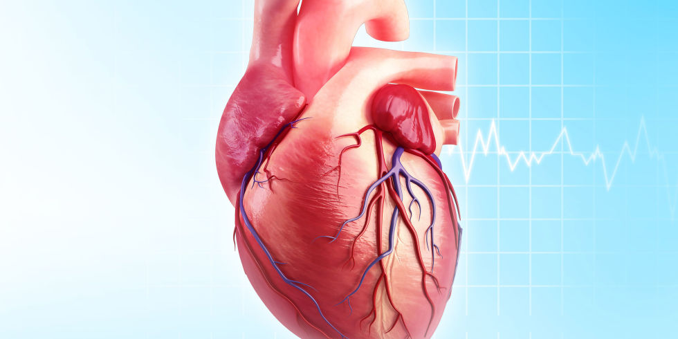 Image result for heart diseases