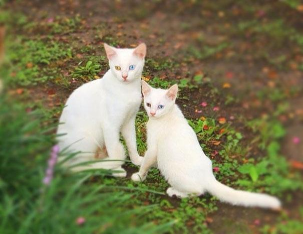 animals-with-miniature-versions-of-themselves-30
