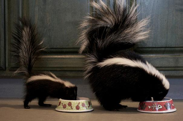 animals-with-miniature-versions-of-themselves-32