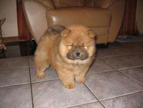 cute-fluffy-animals-23