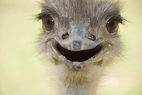 cute-smiling-animals-15