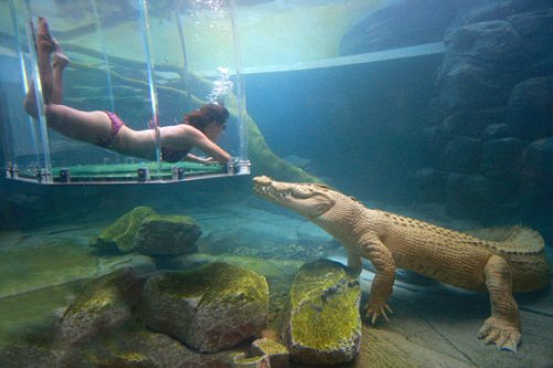 crocosaurus-cove-552lvg040910