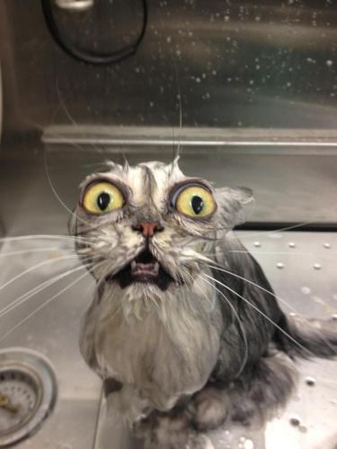 bathcat (3)