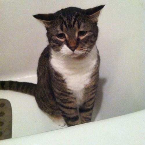 bathcat (9)