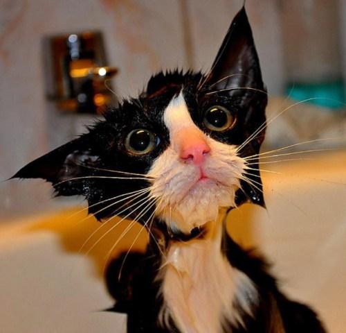 catshower (10)