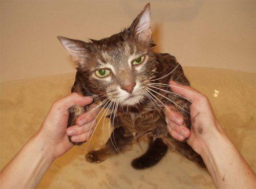catshower (14)