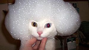 catshower (18)