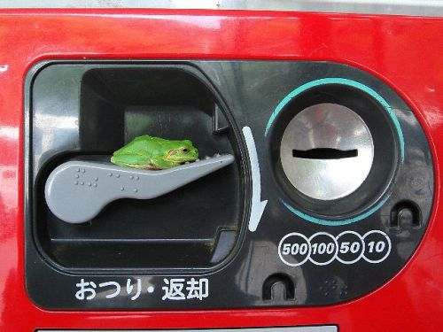 frog (9)