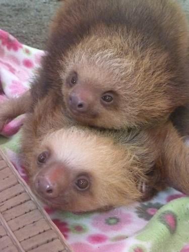 sloth1 (14)