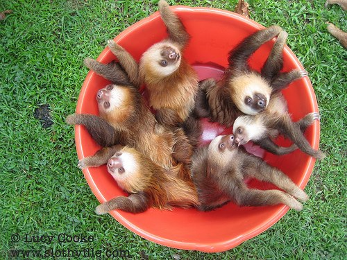 sloth1 (18)