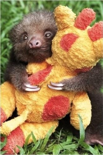 sloth1 (3)